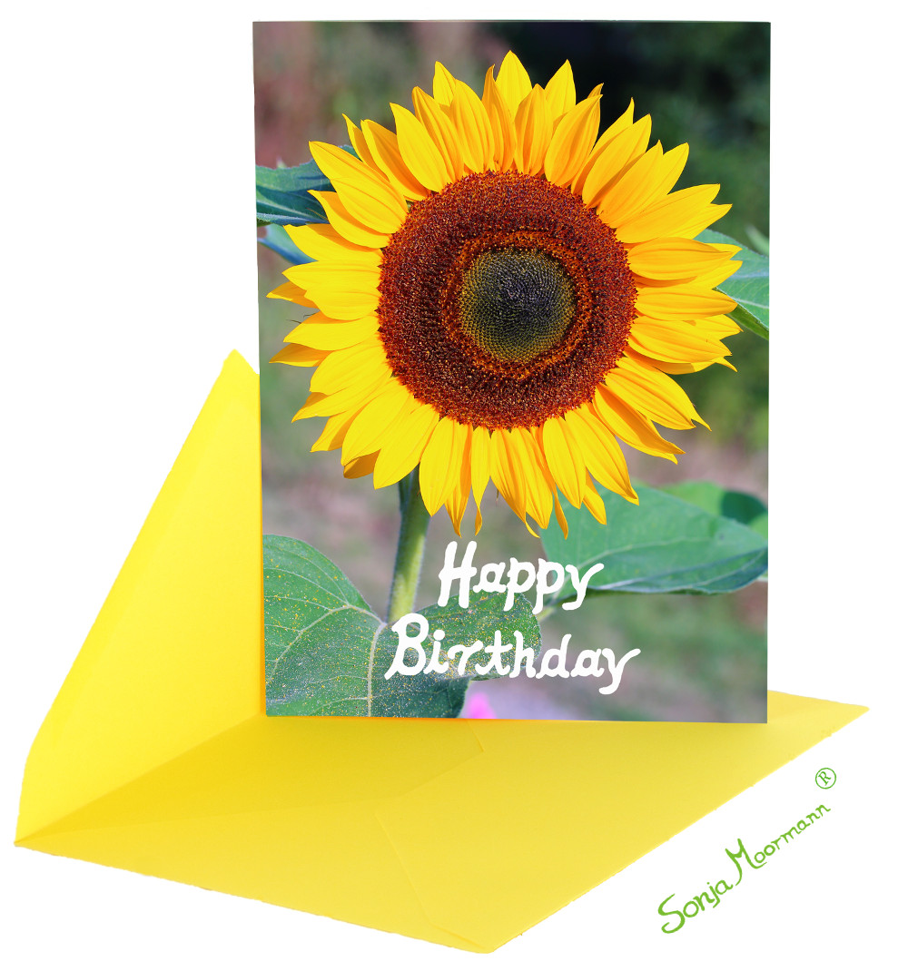 1 postkarte mit sonnenblume mit kuvert. Black Bedroom Furniture Sets. Home Design Ideas